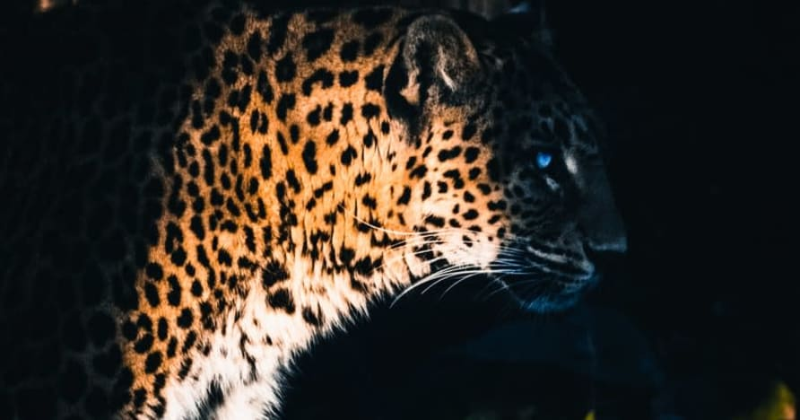 Yggdrasil Partners ReelPlay освобождает Jaguar SuperWays от Bad Dingo